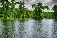 Перемещаться на шлюпку в Wakulla скачет парк штата стоковое фото rf