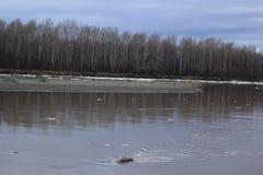 Перемещаться льда стоковое изображение rf