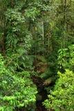 перемещать национального парка daintree Стоковые Изображения