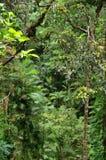 перемещать национального парка daintree Стоковое Фото