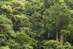 Перемещающ национальный парк Gorge Barron Стоковое Фото