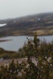 Перемещение в горах Стоковые Фотографии RF