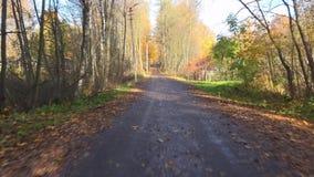 Перемещение леса осени автомобилем на дороге осенью 4K видеоматериал