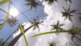 Перемещение, летние отпуска и каникулы, природа видеоматериал