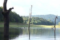 Перемещение & живая природа Стоковое фото RF