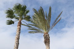 Перемещение засаживает тропическое Стоковые Фотографии RF