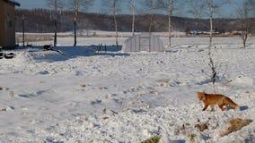 Перемещение зимы Хоккаидо ежегодное Стоковое фото RF