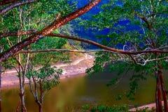 Поток джунглей стоковая фотография rf