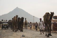 Перемещение каравана верблюда Стоковое фото RF