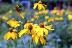 Перемещение к Бангкоку, Таиланду Красивые желтые цветки Стоковые Фото