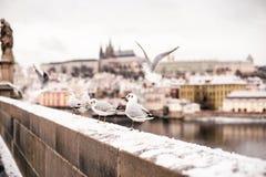 Перемещение к Праге Стоковое Фото