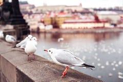 Перемещение к Праге Стоковое Изображение RF