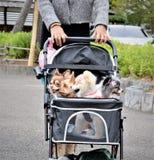 Перемещение любимчиков собаки в детской дорожной коляске в Японии стоковая фотография rf