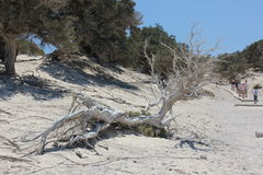 Перемещение, природа, Греция, Chrissi, Стоковое фото RF