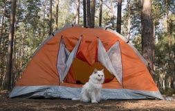 Перемещение с котом Стоковая Фотография