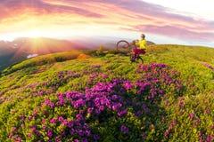 Перемещение с цветком carpathians стоковое фото rf