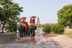 Перемещение: Ayutthaya Таиланд, ехать слон слон доминантная работа стоковое изображение rf