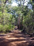 перемещение bush Стоковое Фото