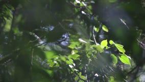 Перенося фокус леса видеоматериал