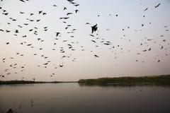Перепад Okavango птиц Silhouetteof езды шлюпки захода солнца, Ботсвана Afr стоковые фото