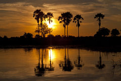 Перепад Okavango Стоковая Фотография RF