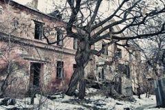 Переплетаннсяые старые деревья на предпосылке покинутого разрушанного старого особняка Стоковое фото RF