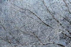 Переплетение или картина белых покрытых снег ветвей дерева Стоковое Изображение
