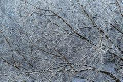Переплетение или картина белых покрытых снег ветвей дерева Стоковые Изображения