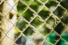 Переплетенная сплетенная сетка металла покрытая с тополем вниз на запачканном конце-вверх предпосылки ограждать аллергены на улиц стоковое фото