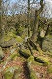 переплетенные корни Стоковая Фотография