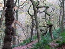 Переплетенные пугающие жуткие деревья зимы в туманном лесе зимы Стоковое Изображение