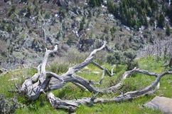 Переплетенный длиной на горном склоне стоковое фото