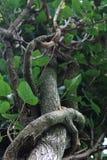 Переплетаннсяые ветви Стоковое фото RF