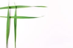 4 переплетаннсяых лезвия травы на белой предпосылке Стоковое Изображение