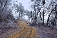 Переплетенная дорога в лесе на туманный день Стоковое Изображение