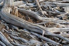 Переплетенная древесина Стоковая Фотография