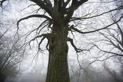Переплетенное, жуткое дерево Стоковые Изображения RF