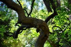 Переплетенные ветви в зеленом цвете природы Стоковое Изображение RF
