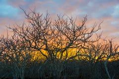 Переплетенный заход солнца деревьев Стоковое Изображение