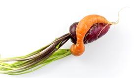 2 переплетенных моркови Стоковая Фотография RF