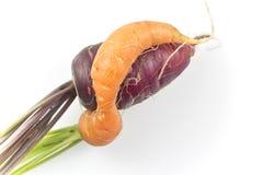 2 переплетенных моркови Стоковые Изображения RF