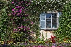 перерастанное цветками окно стены Стоковые Фото