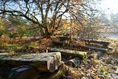 Перерастанные деревянные скамьи с заморозком и contre-jour стоковое изображение rf
