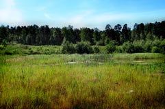 Перерастанный пруд около леса стоковое фото