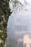 перерастанный стволом дерева и домом мха влажными в тумане Стоковое Изображение RF