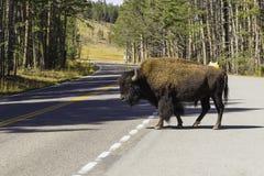 Пересечение дорог буйвола Стоковое Изображение