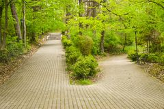 Пересечение 2 переулков в парке среди деревьев и кустарников Большой переулок splitted на 2 более небольших путях Один переулок и стоковые изображения