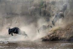 Переселение wildebeest Стоковое Изображение RF