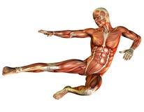 перескакивание делает человека muscle изучение Стоковая Фотография