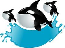 Перескакивать кит иллюстрация вектора